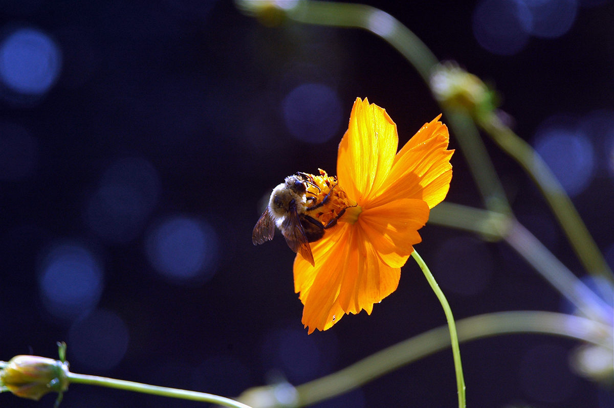 Bumblebee in the Cosmos