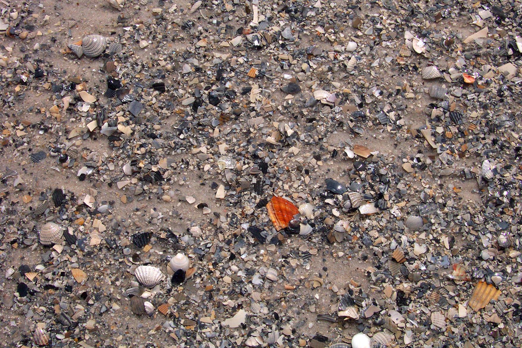Orange Shell