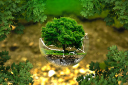 environmental-protection-326923