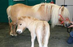 Clinique vétérinaire Rance Frémur