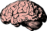 brain-2845862__340.webp