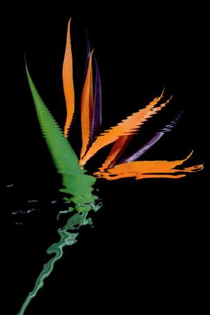 2004_Stills_MOTIV_11_3290.jpg