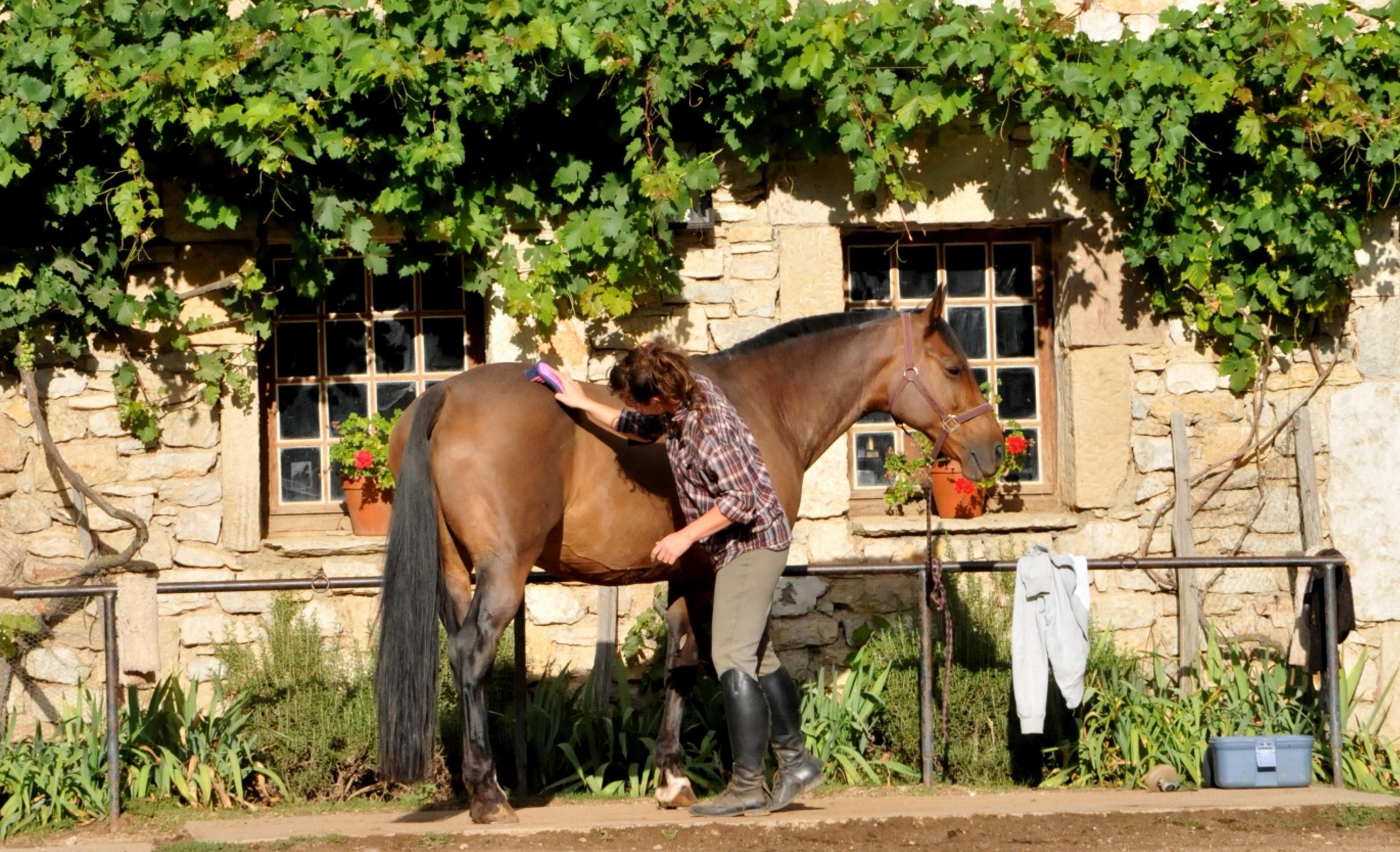 Ecuries de Seuzac préparation des chevaux