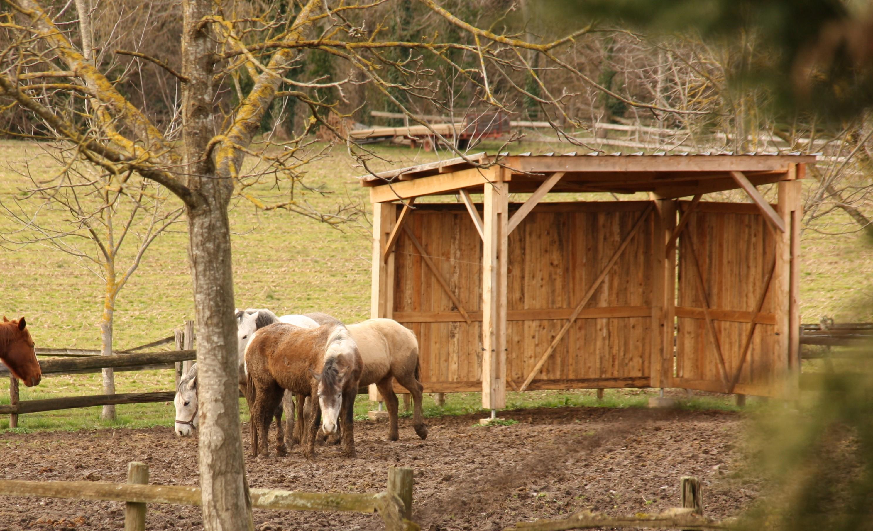 Ecuries de Seuzac abri chevaux