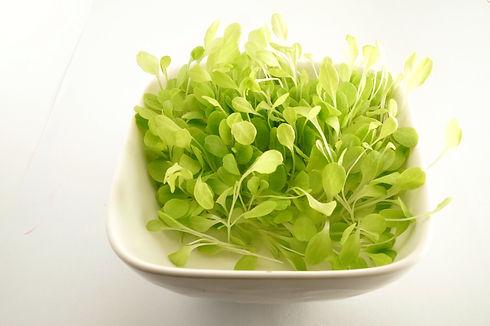 Butter Crunch Lettuce 1_edited_edited.jpg