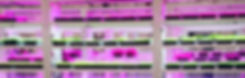 DSC07808_edited_edited.jpg