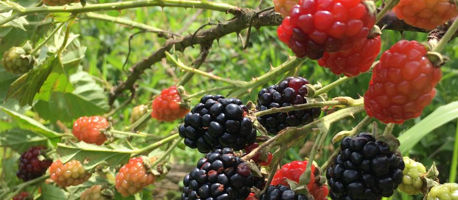 AMA Brasil inicia implantação de nova Unidade de Fazenda Ambiental para cultivo de Frutas Vermelhas