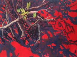 Mangrove IV