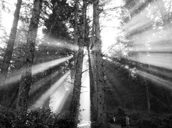 Sun Rays in Thick Forest