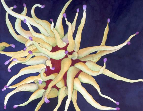 Anemone.jpg
