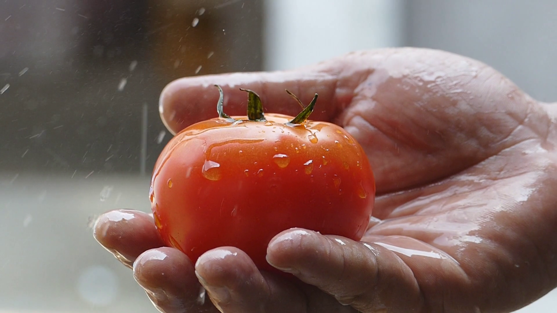 videoblocks-hold-a-tomato-wash-the-water