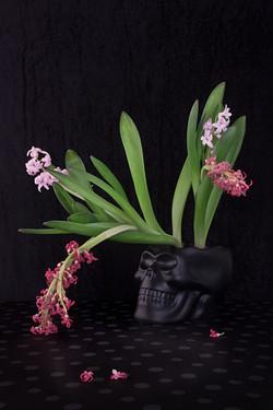 Hyacinth and Skull