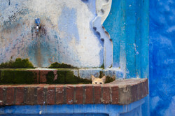 Chefchaouen Kitty