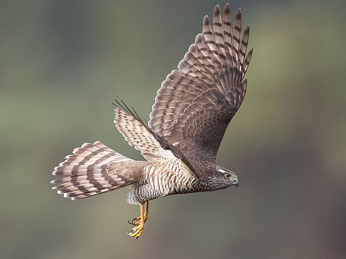 Booking deposit Sparrowhawk hide 20-24 September
