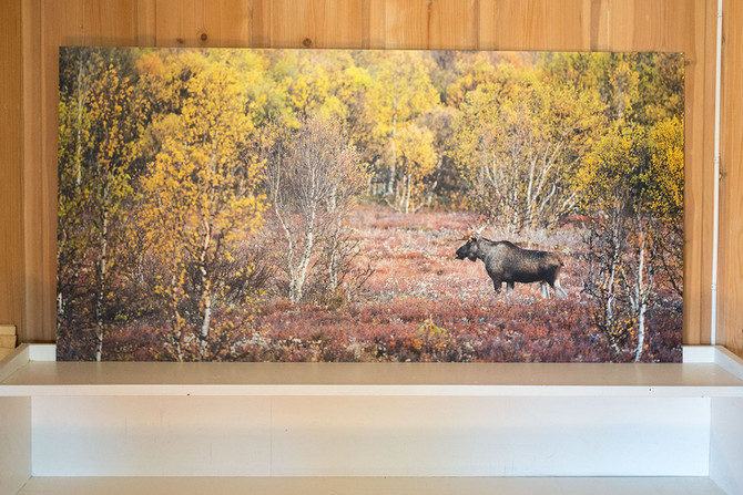 Review: ALU-DIBOND AND FOREX PRINTS FROM ZOR.