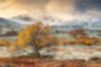 Landscape_F5Q1247_edited.jpg