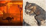 [긴급구호] 호주 최악의 산불, 비상사태선포