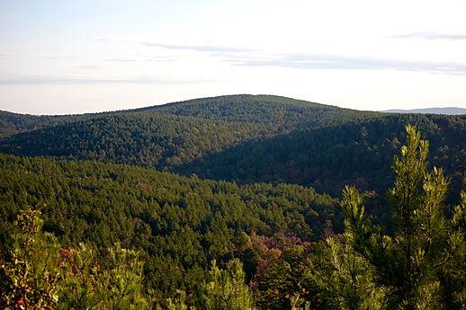 Pushmataha County Forest