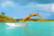 SUPTurqas&Caicos.jpg
