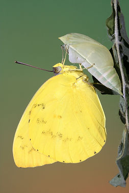 butterfly+home+page+-+1.JPG