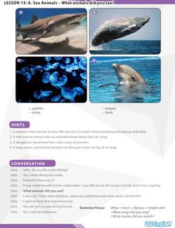 海洋動物 Sea Animals