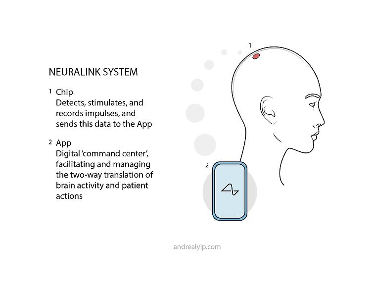 neuralinksystem.png