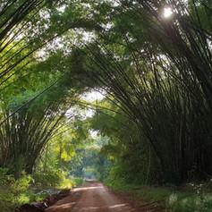 East Guinea