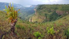 Fouta Djalon, Guinea