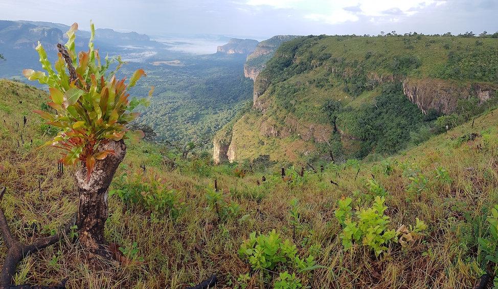 GuineaFoutaDjalon.jpg