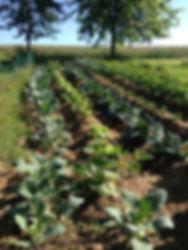 Das Mulchen, das Haken und das für Gemüs