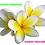Thumbnail: Bare Pits Body Organic Infused Gardenia Tiare Coconut EXOTIC Body Oil 2oz