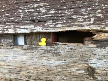 Ducks as a Symbol of Letting Go