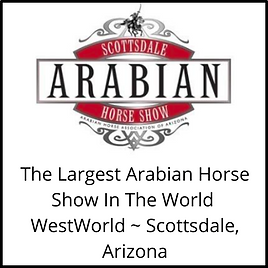 The Largest Arabian Horse Show In The World WestWorld _ Scottsdale, Arizona (1).png