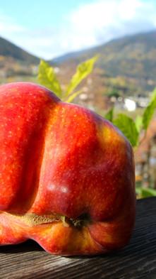 Tschiederer_Doppelter Apfel.jpg