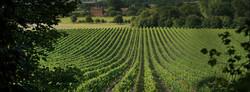 Engelsk vinmark