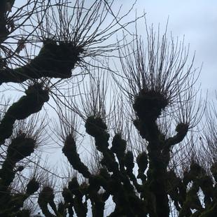 nature / vent dans les arbres