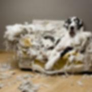 Education canine destruction chien