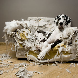 Education canine destruction chien