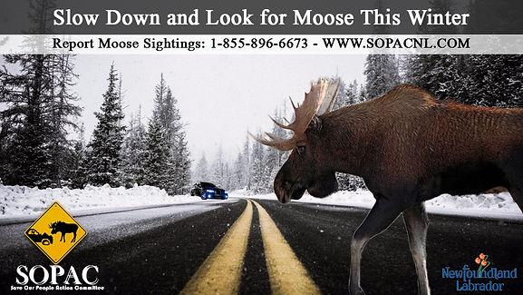 Winter_Moose_Ad_2019a.jpg