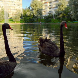 Пленэр на Быковом болоте
