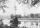 Le pin solitaire 1913