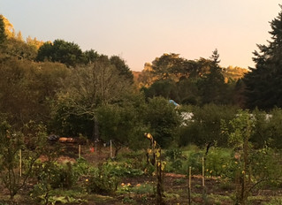 Regenerative Ecopsychology and Applied Permaculture (REAP): Inspiring Resilient Communities