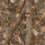 woodland-shadow-45.jpg