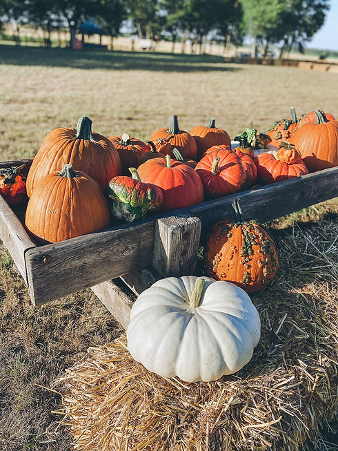 orange-pumpkins-white-pumpkins-turks-turban-warty-gourds-trough-hay-bales