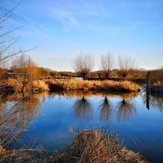 Le Marais des Cavins par @virginie_curieusedenature