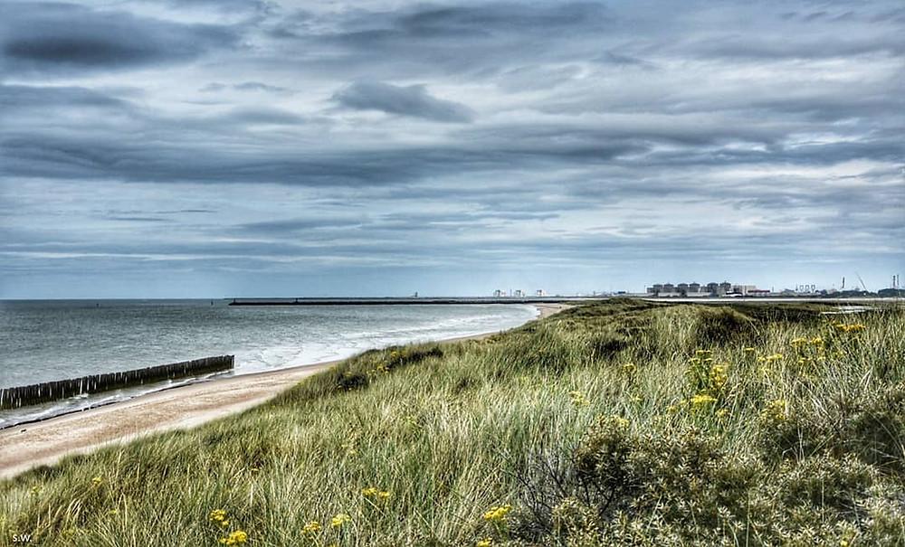 platier d'oye oye plage plage du nord mer du nord oiseaux ornithologie