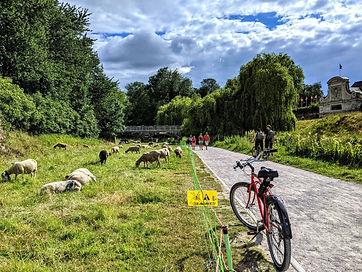 vélo beach cruiser a la citadelle de Lille