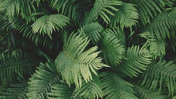 Calming Pattern of Leaves