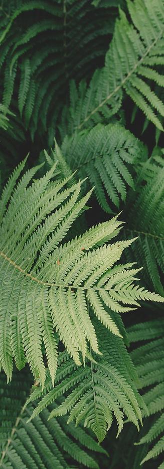 צמחים | אופיר תשובה פסיכותרפיסט