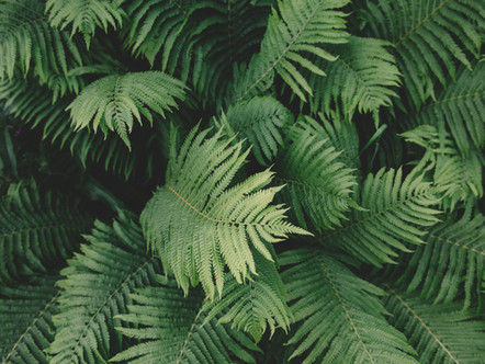 Grün ist die Hoffnung -  Familiengottesdienst am Palmsonntag